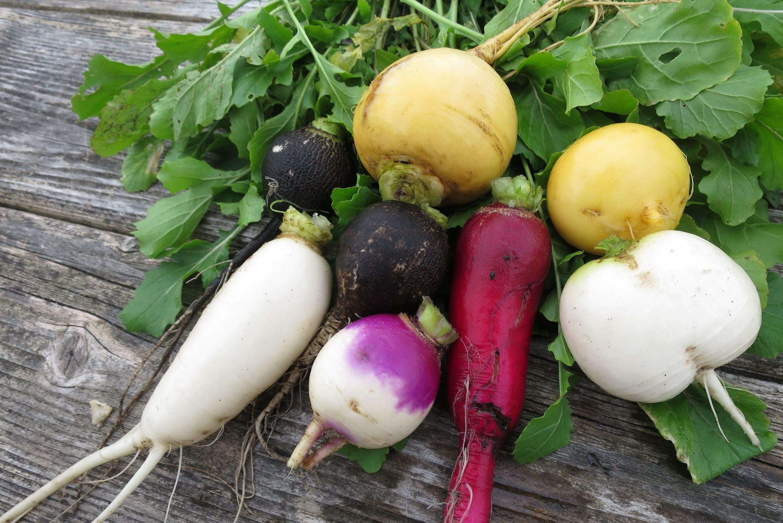 Первый посев в апреле-мае: свекла, морковь, редис. Как правильно